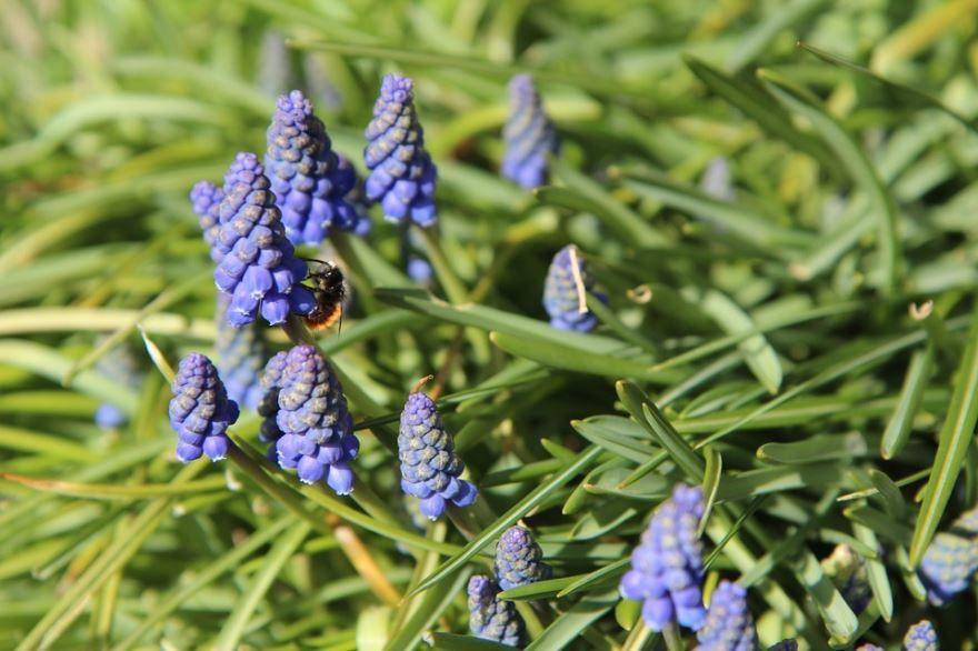 Смотреть фото осенних цветов мускари онлайн