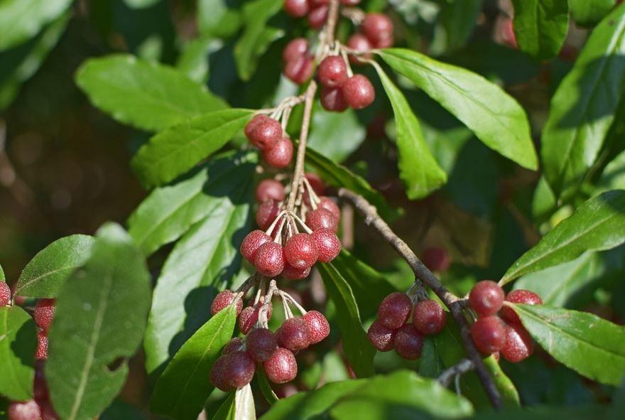 Смотреть фото полезных для здоровья маслин