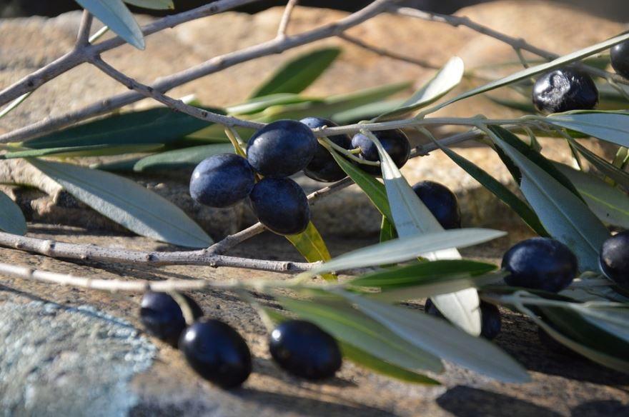 Фото черных оливок – маслин бесплатно