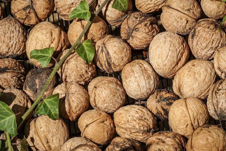 Смотреть фото грецкого ореха, обладающего полезного свойствами