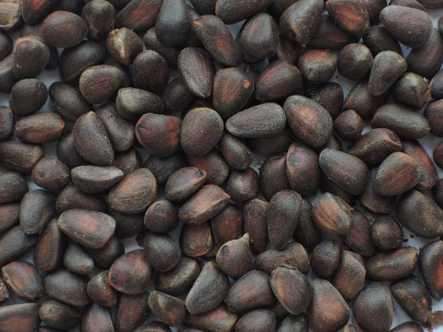 Смотреть фото кедровых орехов, обладающих полезными свойствами