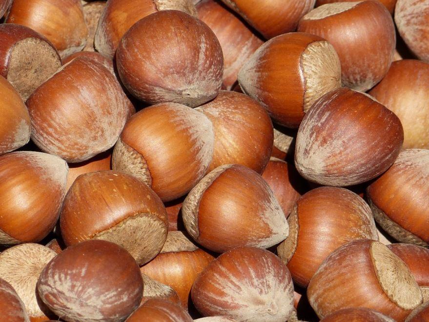 Фото домашнего, лесного ореха – фундука