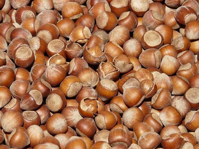 Смотреть фото лесного ореха – фундука, несущего пользу и вред человеку