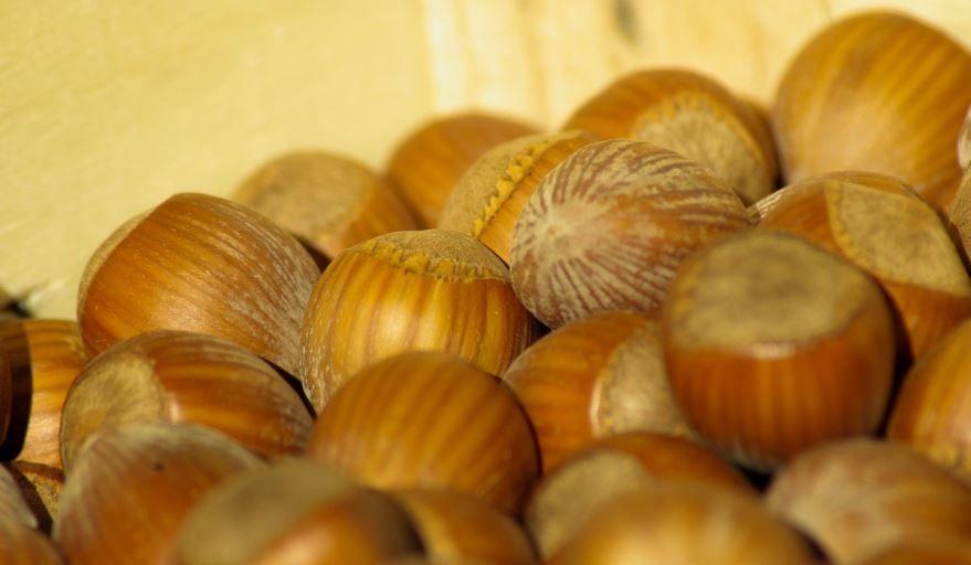 Купить фото лесного ореха? Скачайте бесплатно