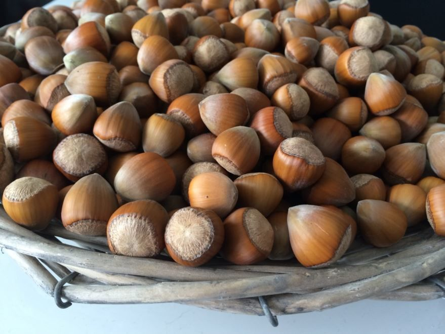 Фото калорийного домашнего лесного ореха, несущего пользу организму