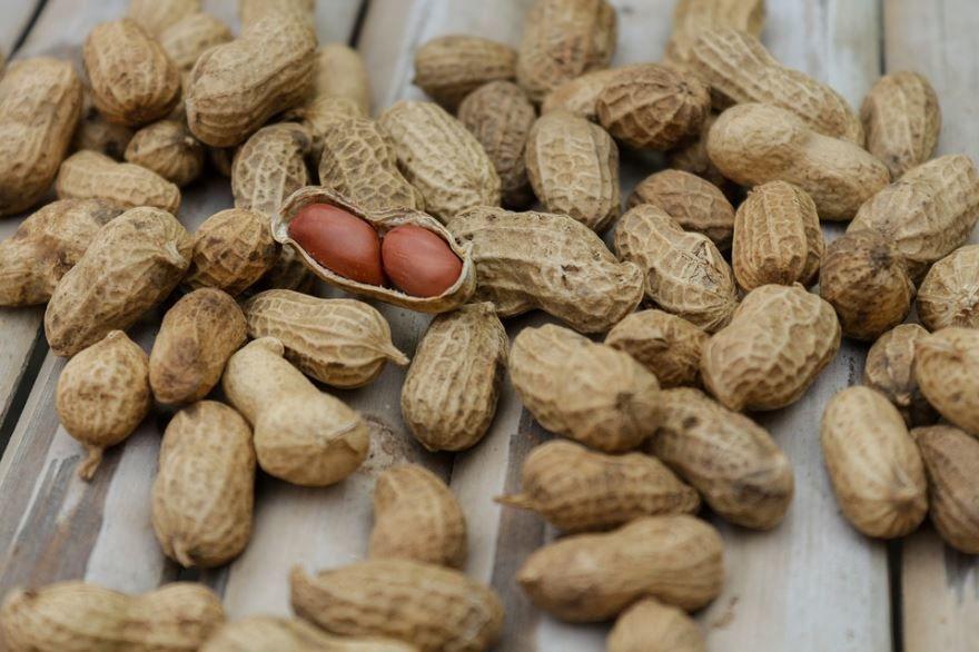 Фото домашнего, ореха – арахиса