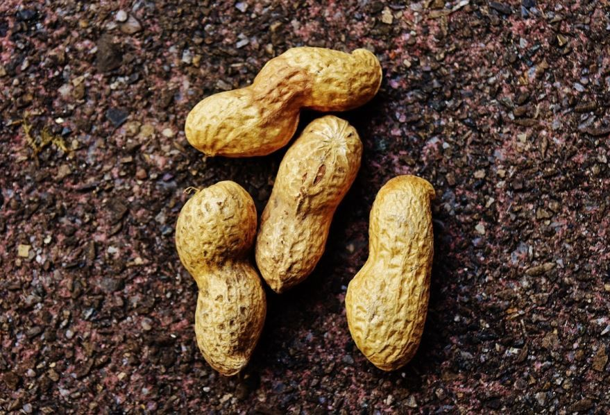 Купить фото арахиса? Скачайте бесплатно