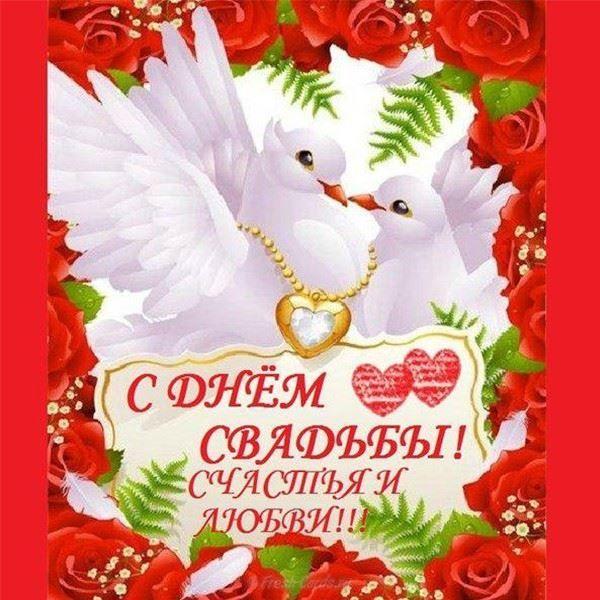 Красивые открытки со свадьбы, голуби