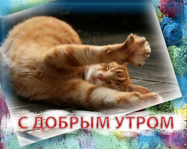 С добрым утром! Котик