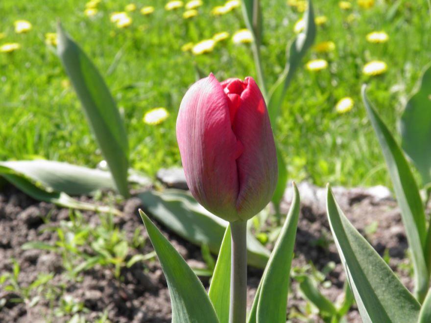Смотреть фото красивых цветов для хорошего букета