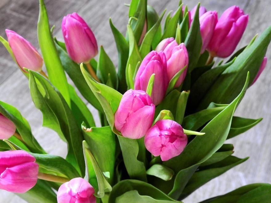 Бесплатно скачайте фото красивых цветов тюльпанов онлайн