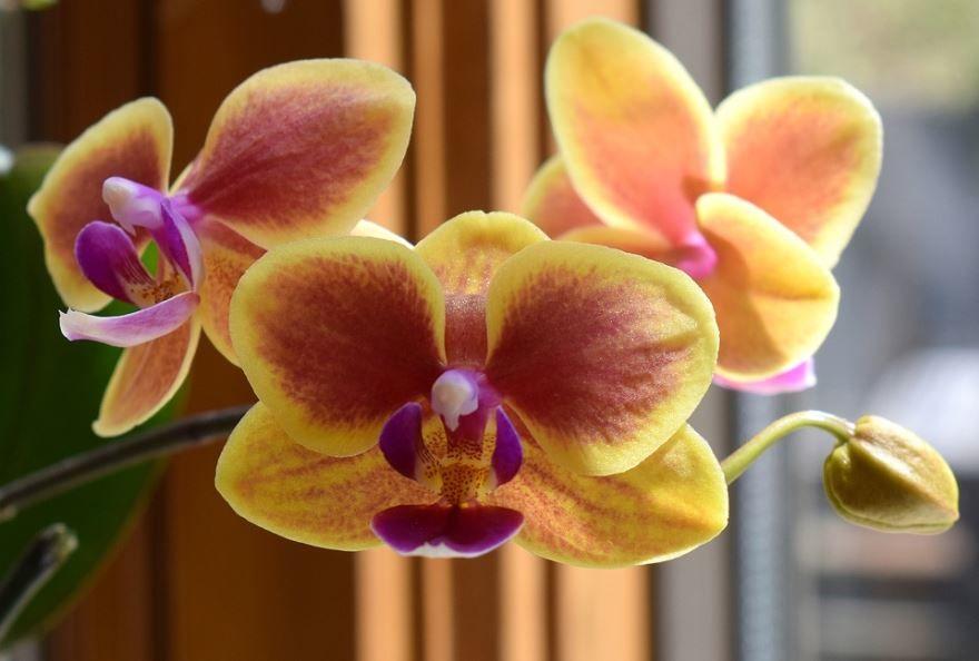 Купить домашних цветов фаленопсис? Скачайте бесплатно