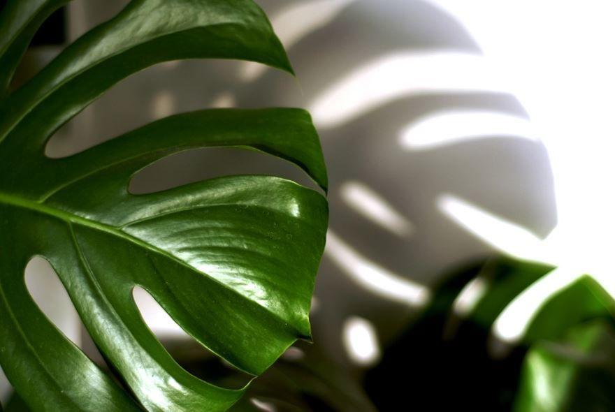 Бесплатные фото комнатного филодендрона с листьями