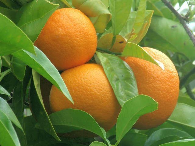 Смотреть фото цитрусовых фруктов с нашего официального сайта