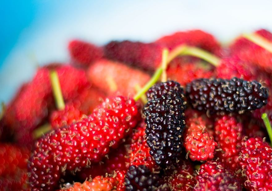 Смотреть фото ягод шелковицы, выращенной в саду