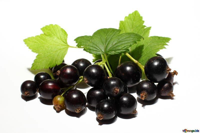 Смотреть фото осенней, черной смородины, обладающей полезными свойствами и противопоказаниями