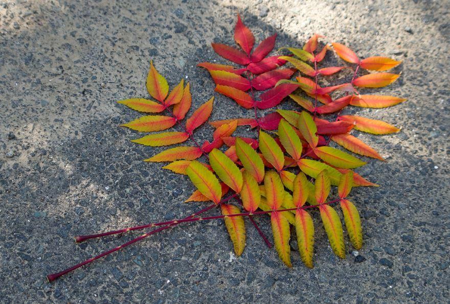 Фото цветка сумаха, который можно держать дома онлайн