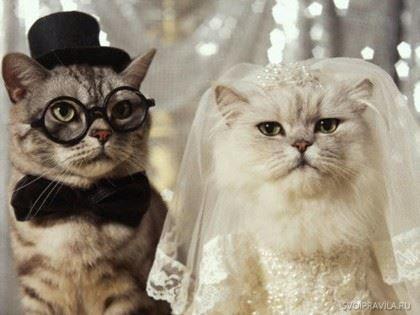 Прикольное поздравление с годовщиной Свадьбы