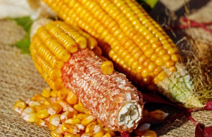 Скачать онлайн классической, свежей кукурузы для вкусных рецептов