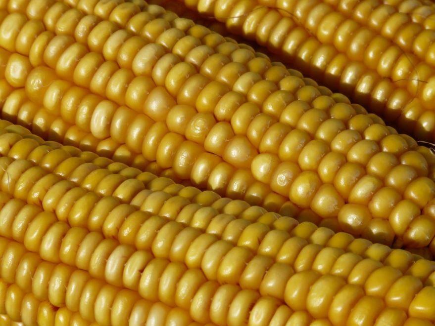 Купить фото початков простой кукурузы? Скачайте бесплатно для рецепта с огурцами, рисом и крабовыми палочками