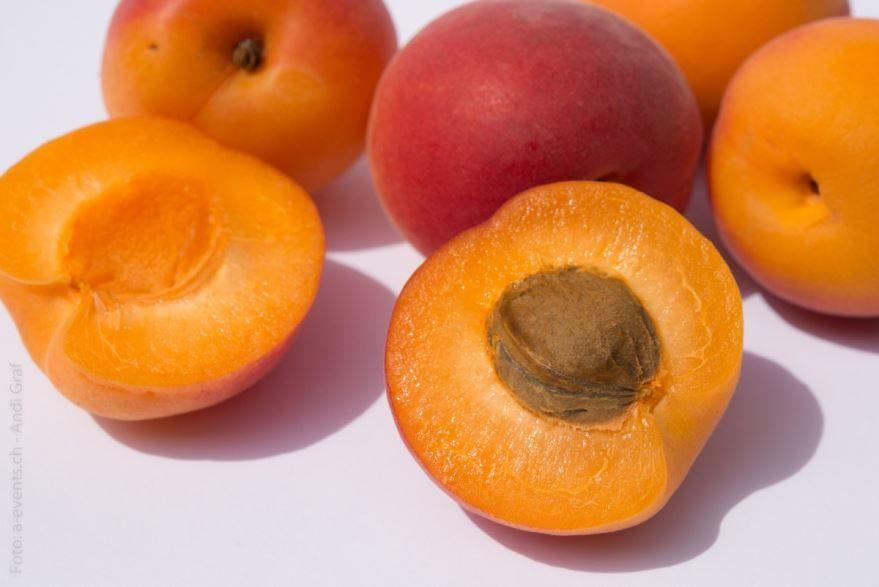 Лучшие фото и картинки осенних плодов дерева – абрикоса