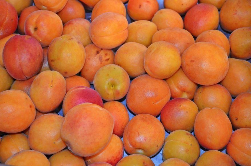 Бесплатные фото и картинки плодов дерева абрикоса