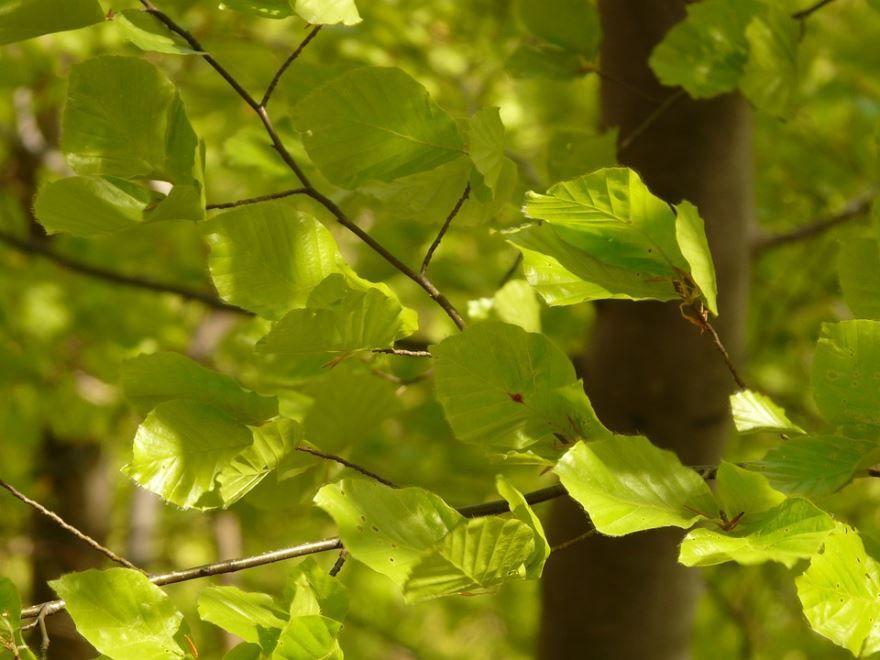 Смотреть фото зимнего растения бук из Москвы на нашем официальном сайте