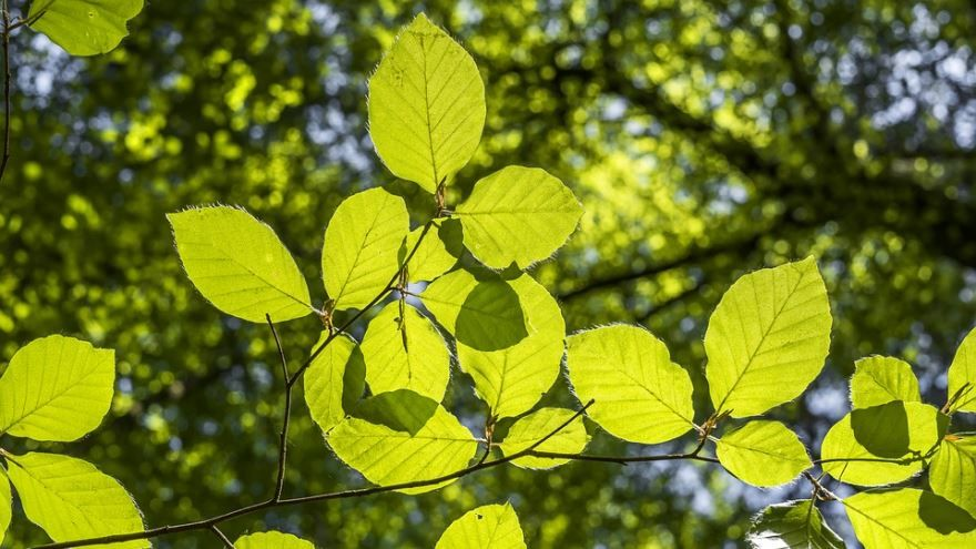 Купить фото дерева бук из Петрозаводска? Скачайте бесплатно