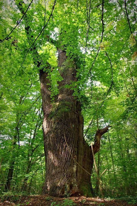 Смотреть фото листьев растения граб, обладающего пользой и вредом бесплатно
