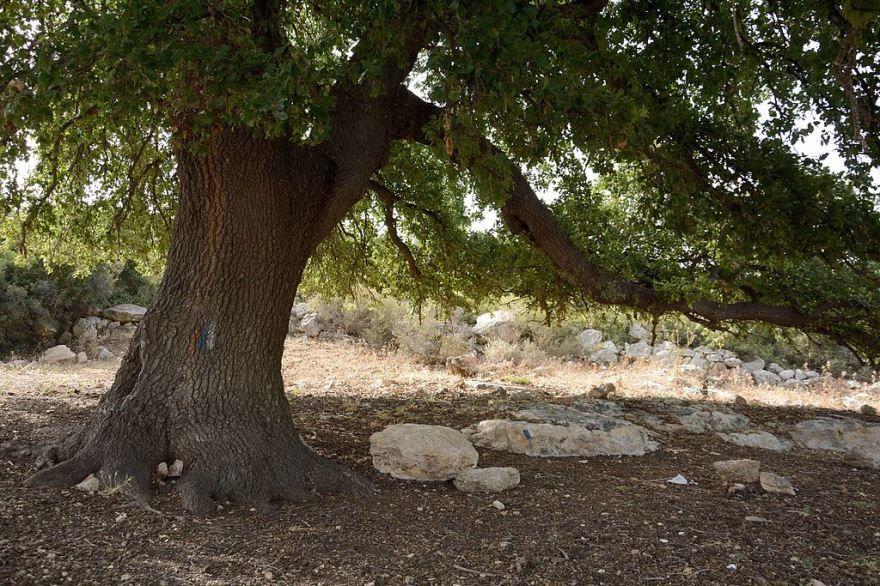 Фото и картинки зимнего дерева – дуба онлайн