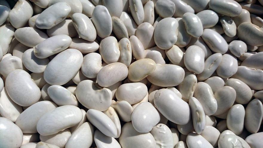 Смотреть фото белой фасоли для вкусных рецептов