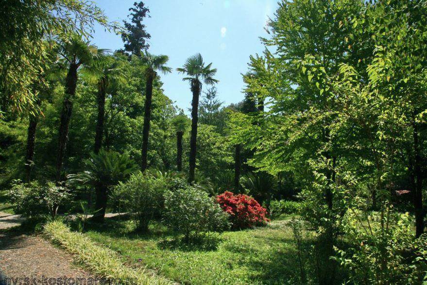 Природа город Сухум