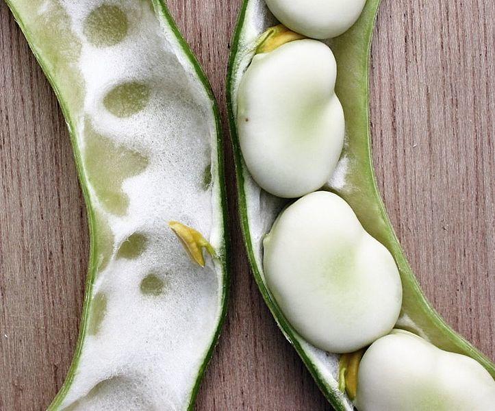 Смотреть онлайн фото растения бобы бесплатно