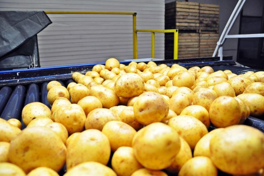 Смотреть фото картофеля для приготовления, обладающего пользой и вредом онлайн