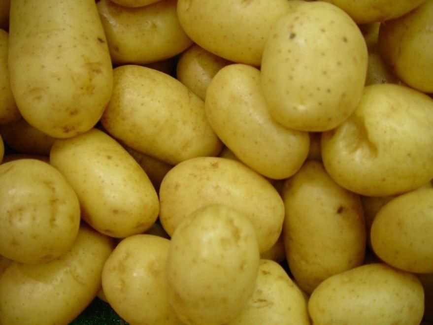 Купить фото растения картофель? Скачайте бесплатно
