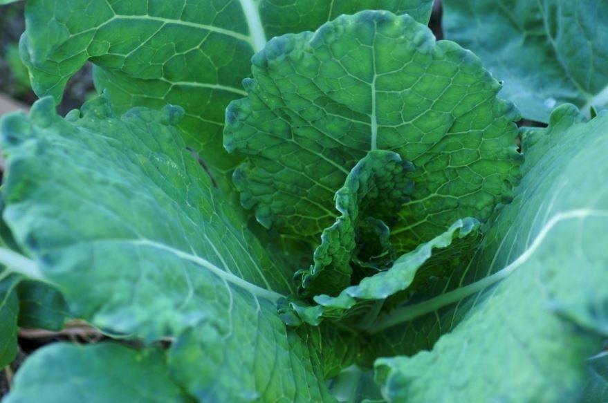 Смотреть фото капусты для рецептов вкусной тушенной капусты