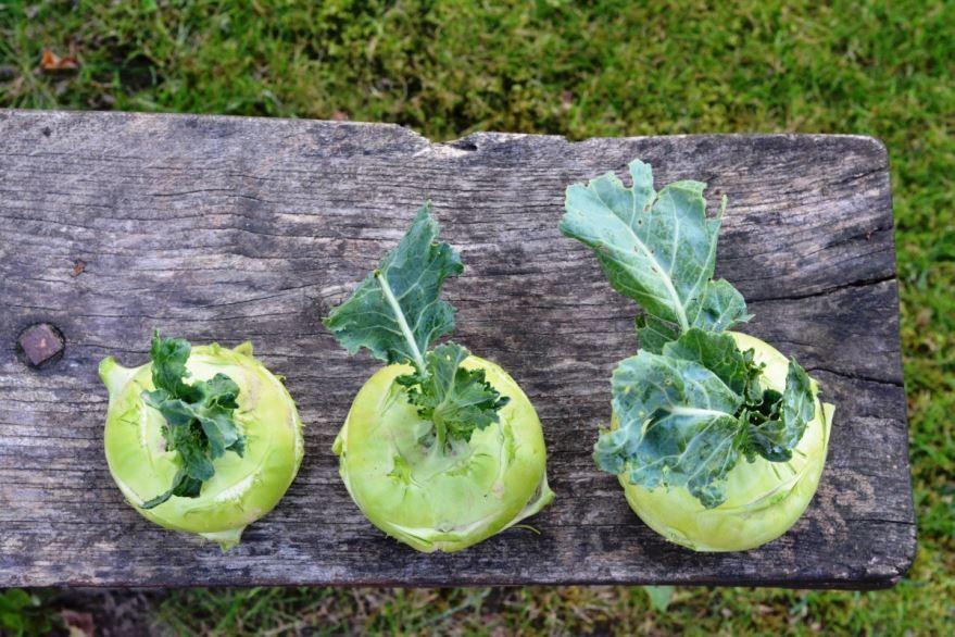 Фото и картинки вкусных блюд по простым и хорошим рецептам