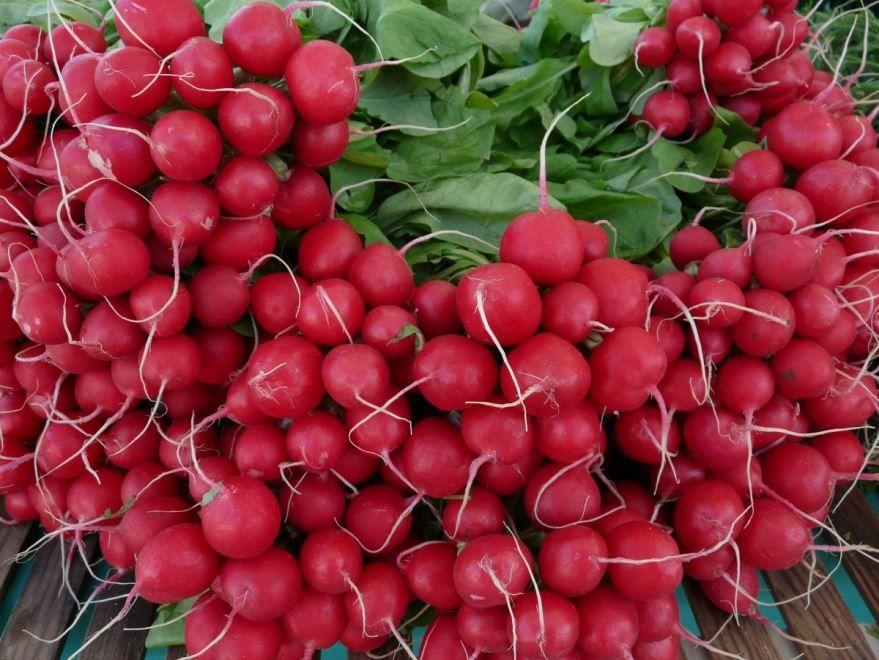 Смотреть фото растения редис дайкон в хорошем качестве