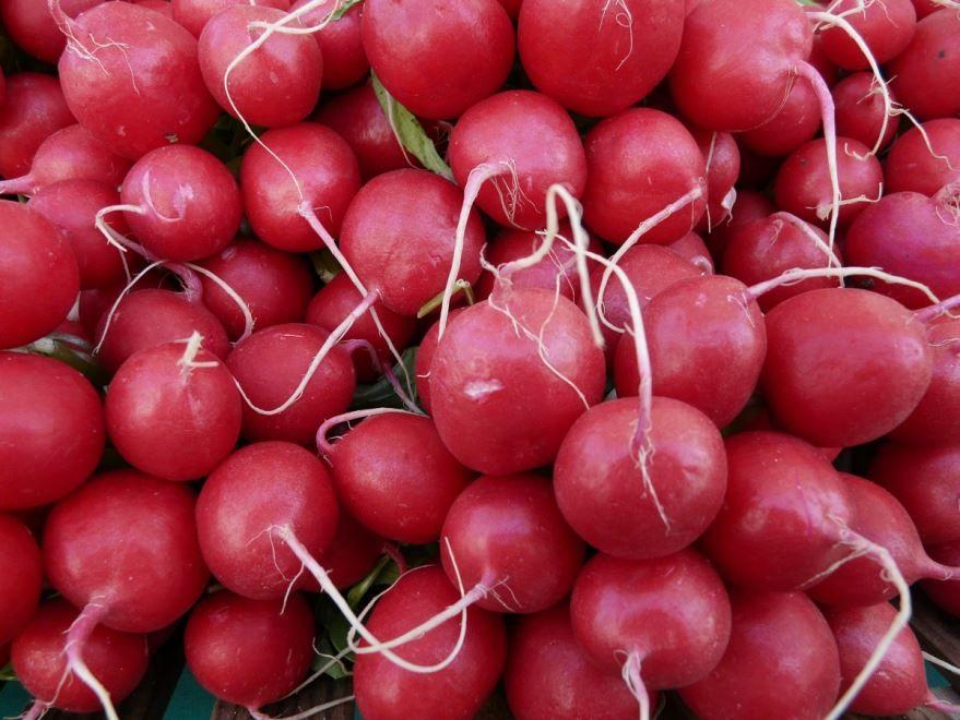 Лучшие фото и картинки растения редиса арбузного, обладающего пользой и вредом