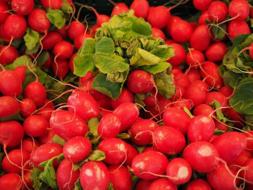 Скачать бесплатно растения редиса, обладающего противопоказаниями