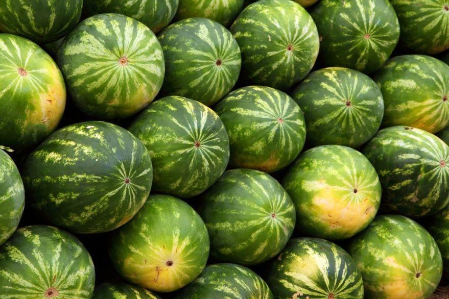 Фото и картинки тяжелого и вкусного растения – арбуза бесплатно онлайн