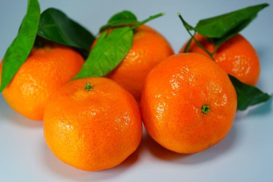 Скачать бесплатно мандарина из Абхазии, обладающего пользой и вредом для человека