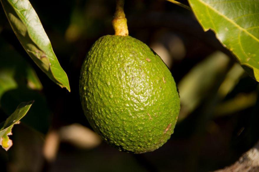 Купить фото очень вкусных авокадо? Скачайте бесплатно