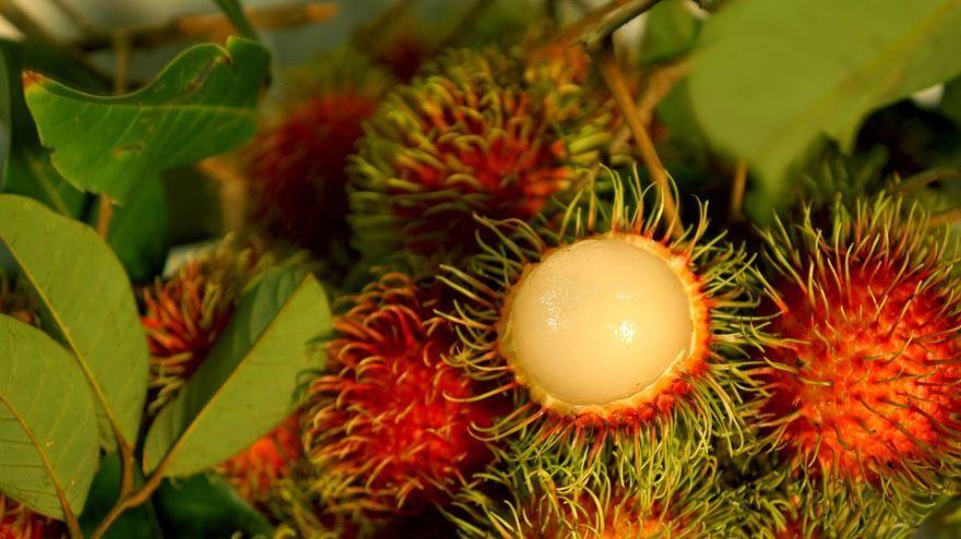 Купить фото фрукта рамбутана? Скачайте бесплатно