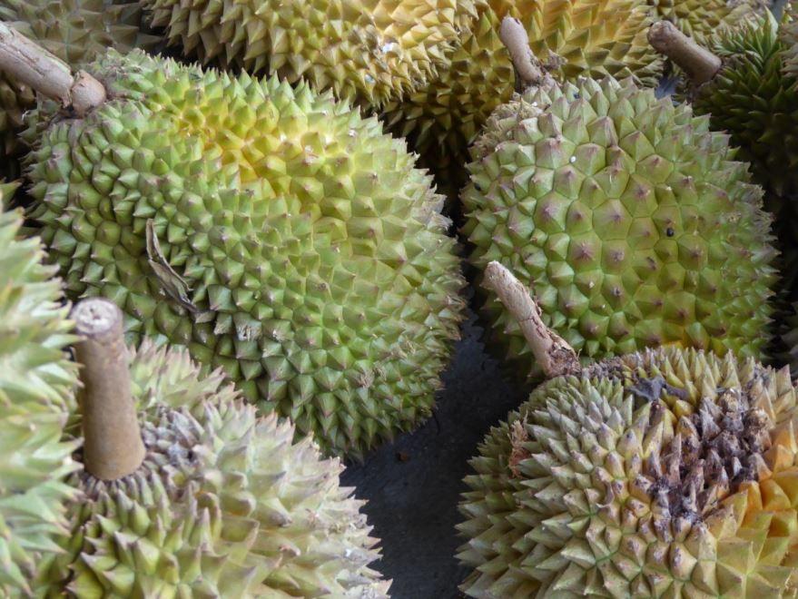 Фото и картинки фрукта дуриана из Тайланда, обладающего пользой и вредом бесплатно онлайн