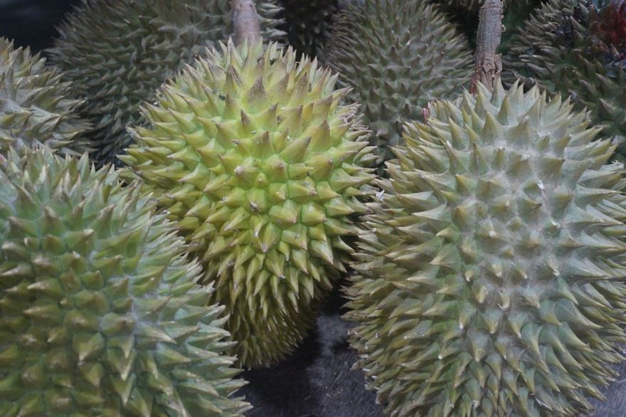 Купить фото фрукта дуриана циабетинового? Скачайте бесплатно