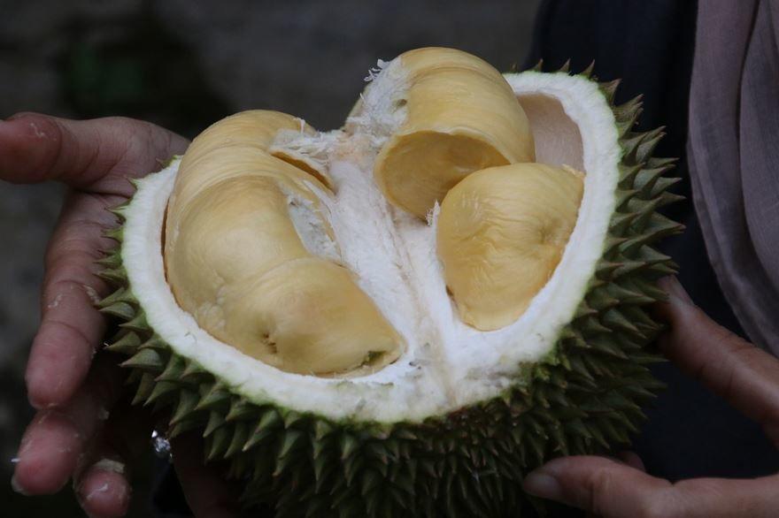 Скачать фото дуриана из Спб, обладающей полезными свойствами