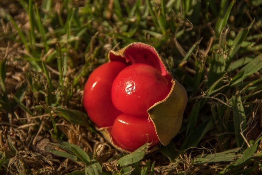Бесплатные фото и картинки растения тамаринда, которое едят