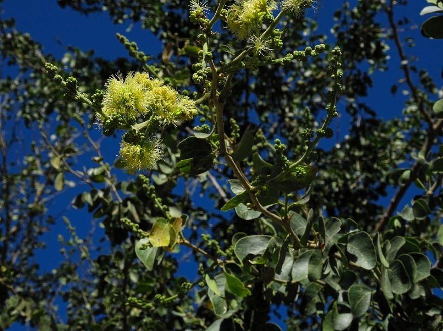 Скачать бесплатно дерева тамаринда с косточками онлайн