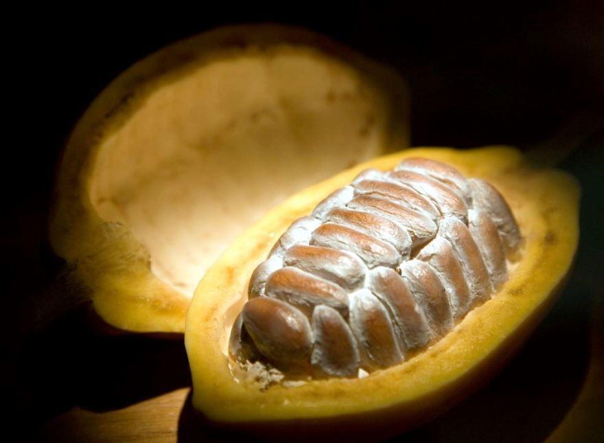 Смотреть фото растения какао для вкусных рецептов печенья и шоколадной глазури